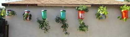 diy homegrown tomatoes upside down planter 1 flowers plants 1001 gardens