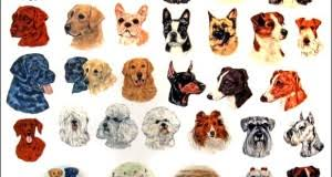 top small dog breeds