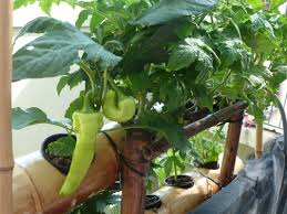 Kitchen Garden In Pots Ideas For Balcony Vegetable Garden Breathtaking Simple Balcony