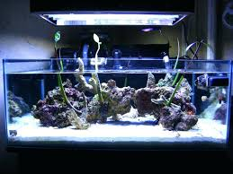 Infinity Fish Tank Infinity Edge Fish Tank Mangroves In A Saltwater Tank A  Q U A R I U M S Pool