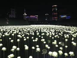ddp led rose garden seoul tourist