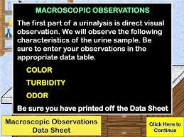 Urine Turbidity Chart Ppt Urinalysis Powerpoint Presentation Free Download Id