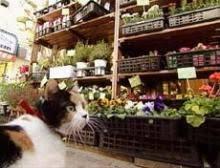 「猫道ガネル」の画像検索結果