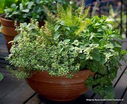 how to grow herbs in indoor containers