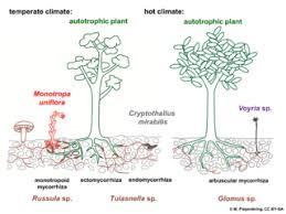 10 Examples Of Autotrophic And Heterotrophic Organisms Lorecentral