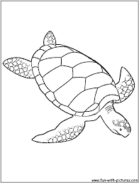 Small Picture Popular Sea Turtle Coloring Page Perfect Color 8650 Unknown
