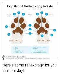 Dog Cat Reflexology Points Outer Inner Outer Paw Paw Paw