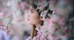 Bunga Sakura Ingin Menikmati Bunga Sakura Kamu Bisa Kunjungi 6 Tempat