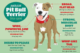 American Pitbull Terrier Feeding Chart 8 Things Animal Shelters Want You To Know About Pit Bull