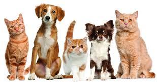 free pets desktop wallpapers dogs stock photo windows amazing apple cats 3046x1614 wallpaper hd