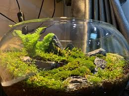 Aquarium PR - Moss terrarium អាចដាក់លើតុធ្វើការបាន... | Facebook