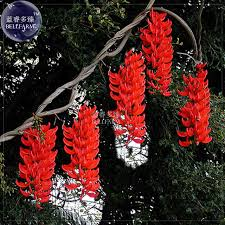 Image result for red perennial flowers