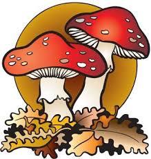Znalezione obrazy dla zapytania grzyby cliparty