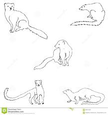 Mongoose Schizzo A Mano Disegno A Matita A Mano Immagine Di Vettore