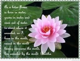 As A Lotus Flower Is Born In Water Desicommentscom