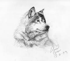 Sketches Animal Easy Sketch Animals At Paintingvalley Com Explore Collection Of