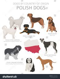 Dogs By Country Origin Polish Dog Stock Image Download Now