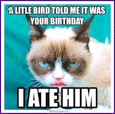 grumpy cat birthday bird. Delighful Cat Birthday Meme With A Cat A Little Bird Told Me It Was Your Birthday On Grumpy Cat Bird E
