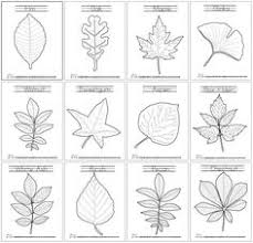 Small Picture Leaf Art every kid will love making art with leaves after seeing