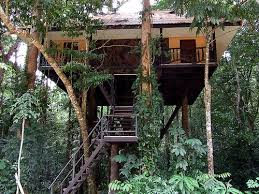 Kao Sok Tree House Resort Thailand Located In One Of The Most Treehouse In Thailand
