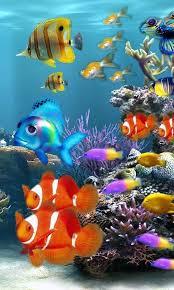 Live Fish Aquarium Wallpaper Group 39