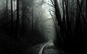 Black dark forest wallpaper, monochrome ...