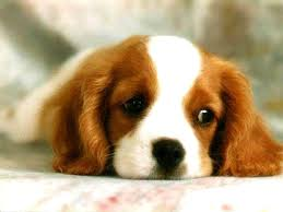 wallpapers pets free s dog puppy 1024x768 126422 pets