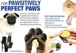 dog paw salve er organic moisturizer for dry rough paws the blissful dog paw salve sled pad moisturiser