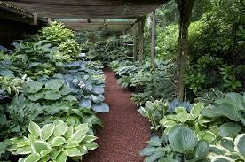 Small Picture Landscape Focused landscape garden design ideas Hosta