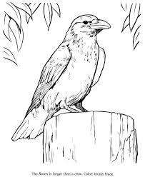 Small Picture Animal Drawings Coloring Pages Raven bird identification drawing