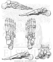Small Picture Anatomy Coloring Book Bones Best images about radiography humerus