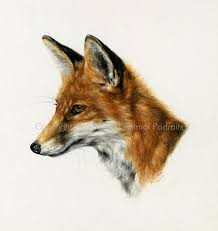fox pictures to print. Brilliant Print Wildlife Art Prints  Fox Print U0027Charlieu0027 Portrait Back To  With Pictures To