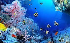 45+ HD Aquarium Wallpapers - Download ...