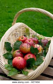 green and red apples in basket. green background; royal gala red apples with leaves in a white wicker basket - stock photo and red apples in basket