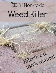 weed killer chemicals. Interesting Chemicals Looking For Safe Alternatives To Roundup Trying Avoid Chemicals Try This  Nontoxic And Effective Weed Killer Glyphosate Chemicalfree Nontoxic Intended Weed Killer Chemicals S