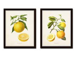 Stampe Antiche Cucina : Articoli simili a stampe di arte botanica stampa antiche