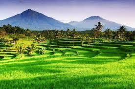 Image result for sawah di indonesia