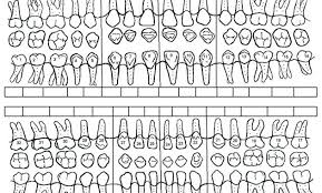 Printable Dental Charting Forms Periodontal Chart Template Studenthost Me