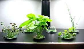 indoor kitchen herb garden ideas indoor kitchen herb garden amazing indoor herb garden light in indoor kitchen herb garden herb garden ideas kitchen