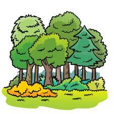 Znalezione obrazy dla zapytania wycieczki do lasu przedszkole
