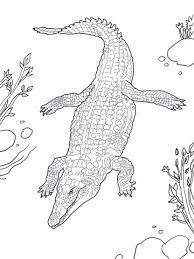 Small Picture Nile Crocodile coloring page Free Printable Coloring Pages