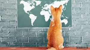 Image result for cat traditional knowledge