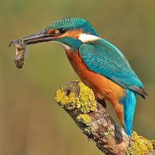 Image result for british wild animals pictures