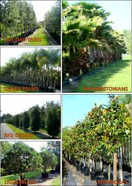 tree nursery tampa1