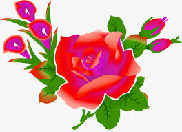 hd rose flower. Delighful Rose Cartoon Rose Flower Hd Cartoon Clipart Rose Flower Clipart PNG  Image And To Hd