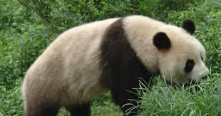 on extinct species essay on extinct species