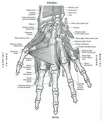 Small Picture Anatomy Of Muscles Anatomy Coloring Book Muscles With Science Of