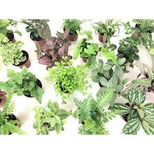 mini terrarium plants 6 plants 2