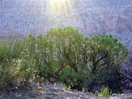 Pathways to Transcendence - Life Coaching, Hypnotherapy | Pathways to  Transcendence