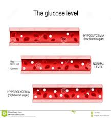 Blood Sugar Levels For Hyperglycemia Chart Glucose In The Blood Vessel Stock Vector Illustration Of